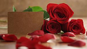 Обои Роза Шаблон поздравительной открытки Трое 3 Красная Лепестки Цветы