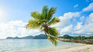 Фотография Тропики Берег Пальмы Песок