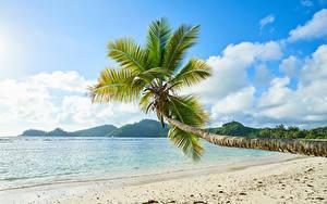 Фотография Тропики Берег Пальмы Песок Природа