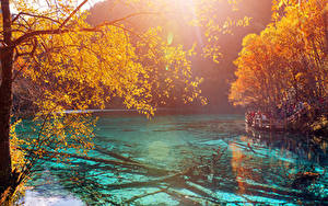 Обои Китай Цзючжайгоу парк Парки Озеро Осень Ветки