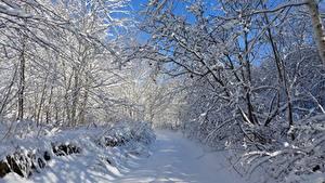 Фото Зимние Дороги Деревья Снег Ветвь Природа