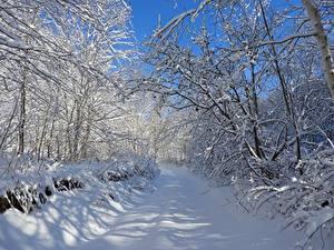 Фото Зимние Дороги Деревья Снег Ветка