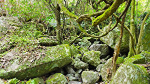 Фотография Тропики Леса Камни Мох jungle