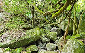 Фотография Тропики Лес Камни Мох jungle Природа