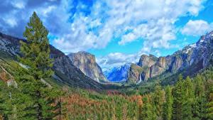 Картинка США Парки Горы Лес Пейзаж Йосемити Облачно Скала