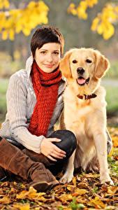Картинка Осенние Собаки Ретривер Шатенка Сидящие Шарф Листва Смотрит девушка