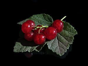 Фотографии Ягоды Смородина На черном фоне Листья Красный Продукты питания