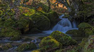 Фотографии Испания Водопады Камень Мха Ствол дерева Природа