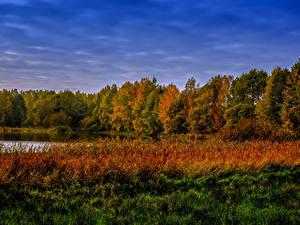 Фото Осень Леса Озеро Трава Природа