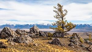 Картинки Россия Горы Камень Пейзаж Деревья Altai Природа
