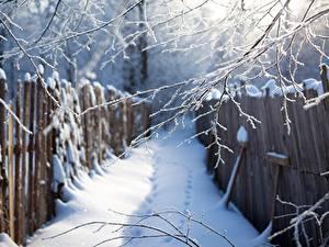 Фотографии Зима На ветке Снегу Забор Природа