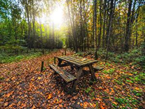 Картинки Лес Осенние Дерево Лист Стола Скамья Природа