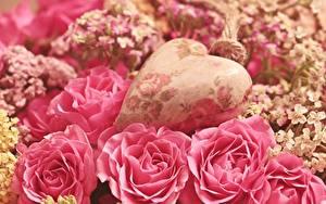 Картинка Розы Вблизи Розовая Лепестков Сердца Цветы