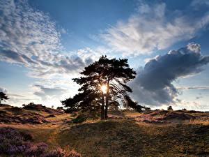 Фото Нидерланды Рассветы и закаты Небо Холмы Деревья Облака Drenthe Природа