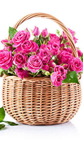 Картинка Розы Белый фон Корзина Розовый Листва Цветы