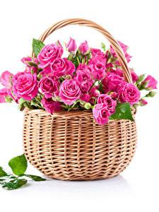 Картинка Роза Белым фоном Корзинка Розовый Листья Цветы