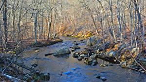 Картинка США Камень Леса Осень Ручей Деревья Ridley Creek State Park, Pennsylvania Природа