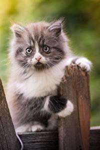 Картинка Кошки Котята Забора Взгляд