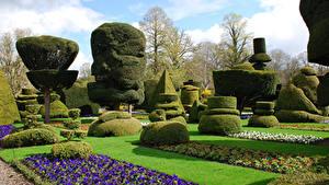 Фотография Англия Сады Газоне Кустов Дизайна Levens Hall Topiary Garden Kendal Природа