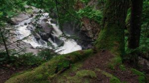 Обои США Водопады Ветвь Мха Ствол дерева Auger Falls Природа