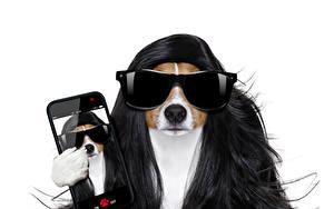 Фото Собаки Белый фон Волосы Джек-рассел-терьер Смартфон Очки Смешной