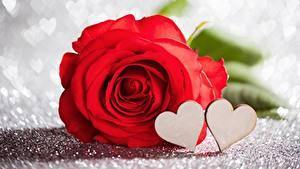 Фотографии Розы День святого Валентина Красный Сердце Цветы