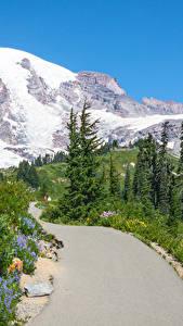 Картинка Штаты Горы Дороги Вашингтон Снег Ель Природа