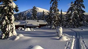 Фотографии Гора Зима Здания Норвегия Снег Тропа Ели mountain Storkletten Природа