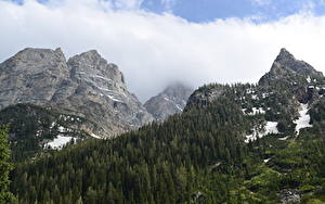 Фото Горы Леса Осень Пейзаж Парки Скала Снеге Grand Teton National Park, Wyoming Природа