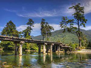Фотография Чили Речка Мосты Горы Деревьев Patagonia