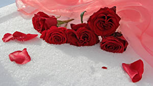 Фото Розы Красный Лепестки Цветы