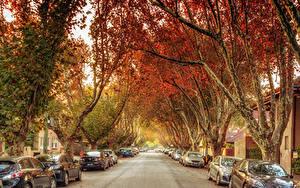 Фотографии Австралия Мельбурн Дороги Улица Деревья Города