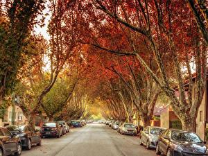 Фотографии Австралия Мельбурн Дороги Улиц Деревьев Города