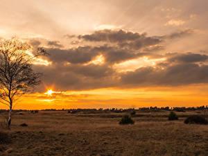 Обои Рассветы и закаты Небо Поля Облака Деревья Природа