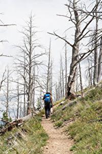 Фотографии Парки Штаты Йеллоустон Тропинка Деревья Гуляет Yellowstone national park
