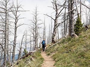 Фотографии Парки Штаты Йеллоустон Тропинка Деревья Гуляет Yellowstone national park Природа