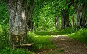 Фотографии Траве Тропа Скамья Дерево Природа