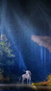 Фото Леса Единороги Лучи света Деревья Ночные Фантастика