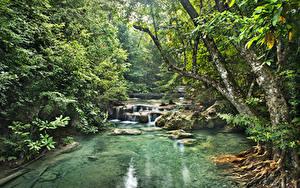 Фото Леса Речка Водопады Тропики Jungle