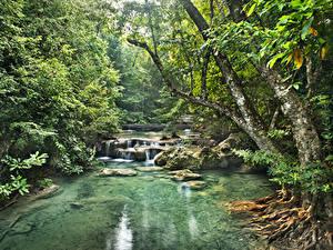 Фото Лес Речка Водопады Тропики Jungle