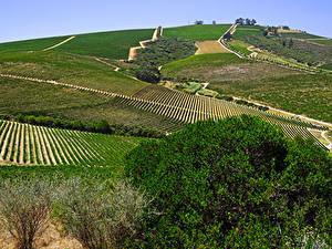 Фотография Южно-Африканская Республика Поля Stellenbosch