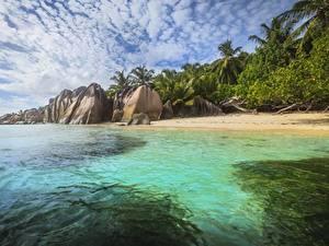 Фотографии Таиланд Остров Тропический Камни Побережье Пальм Phuket