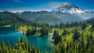 Картинка Америка Парк Озеро Горы Леса Пейзаж Маунт-Рейнир парк Ель Lake Eunice Природа