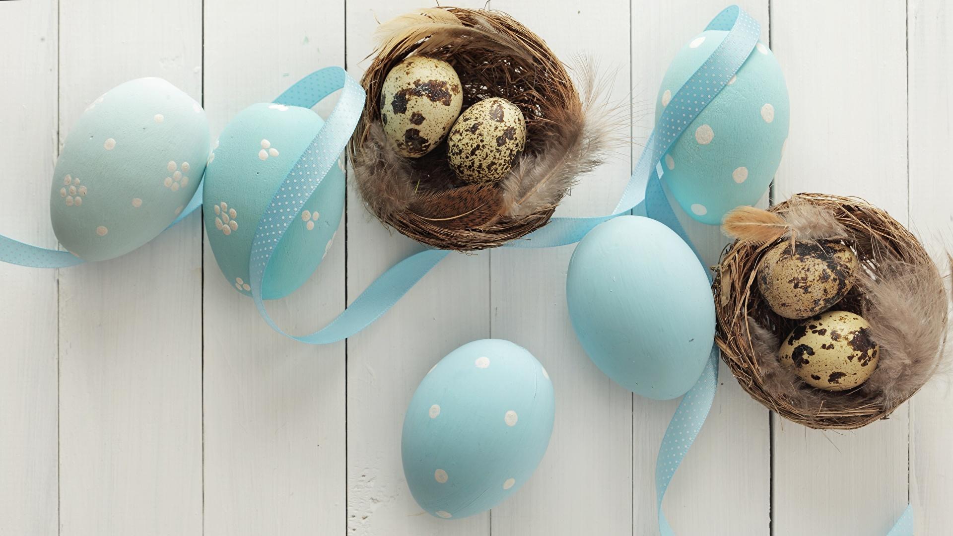 Обои перо, яйца. Разное foto 13