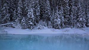 Фотография Канада Парк Зима Леса Побережье Банф Снегу Ели Природа