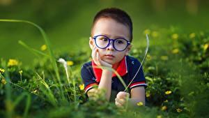 Картинка Азиатки Боке Мальчик Очков Смотрит Траве ребёнок
