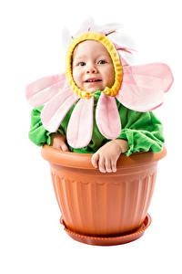 Фото Креатив Ромашки Белым фоном Младенцы Дизайн Смешная Цветочный горшок