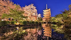 Картинки Япония Токио Парки Пруд Цветущие деревья Вечер Кусты Природа