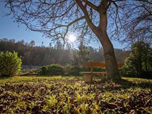 Картинки Осень Деревья Скамья Трава Листья Солнце Ветвь Природа