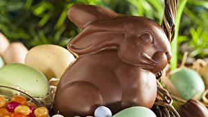 Фотографии Праздники Пасха Сладости Шоколад Кролики Яиц Продукты питания